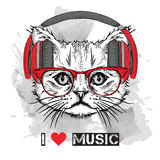 5 lionThe image of the cat in the glasses and headphones. Vector illustration. Royalty Free Stock Photo