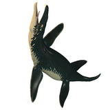 Liopleurodon on White Royalty Free Stock Photo