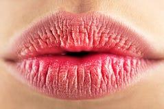Lip care and beauty. Sexy lips. Beauty pink lips makeup. Beautiful make-up. Sensual open mouth. Lipstick or lipgloss royalty free stock photography