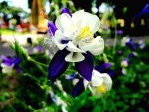 Lipa park Zdjęcie Royalty Free