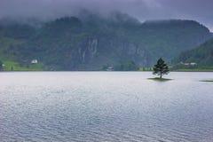 Lipiec 21, 2015: Drzewo w jeziorze na norweskiej wsi, Norw Obraz Royalty Free