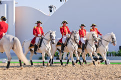 Lipizzan Stallions show Stock Images