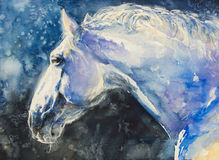 Lipizzaner horse. Painting of lipizzaner horse portrait.Picture created with watercolors Stock Images