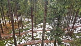 Lipno Forest, Czechia. View of Lipno Forest from the Lipno Treetop Walk in winter, a unique vista from among the trees in the South Bohemian Region of Czech Stock Image