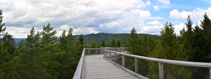 Lipno tree top walk- panorama view Stock Image