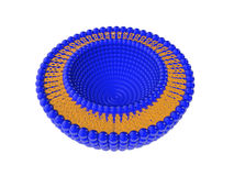 Liposome 3D Illustratie van de bi-Laagstructuur Royalty-vrije Illustratie