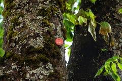 Lipowego drzewa ikona 063 Zdjęcie Stock