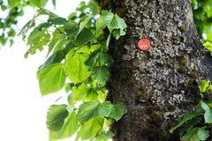 Lipowego drzewa ikona 058 Obrazy Stock