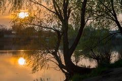 Lipowy drzewo z tło zmierzchem Fotografia Royalty Free