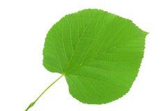 Lipowy liść na białym tle Fotografia Stock