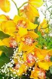 Lippenstift-Anlage mit Blumen Aeschynanthus-radicans Jack Lizenzfreies Stockfoto
