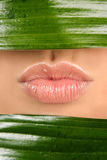 Lips and leaf Stock Photos