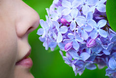 Lips and lilac. Woman close-up smelling lilac with her nose Stock Image