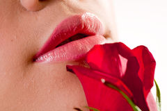 Lips and rose. Close up of a female lips and red rose Royalty Free Stock Images
