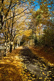 Liptovsky Mikulas, Haj - Nicovo, Slovakia. Autumn leaves over dam Liptovska Mara Stock Photography