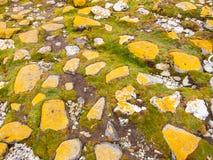 Liquen amarillo en las piedras grandes integradas en hierba Imagen de archivo libre de regalías