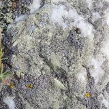 Liquen del color en la cuarcita blanca Fondo Naturaleza de Baikal imagen de archivo