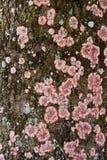 Liquen en corteza de árbol Fotos de archivo libres de regalías