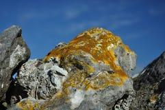 Liquen en la roca de la piedra caliza, Derbyshire, Reino Unido Fotos de archivo libres de regalías