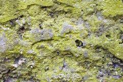 Liquen verde en el bloque de cemento. Imagen de archivo