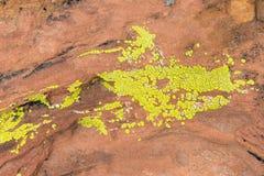 Liquen verde en la piedra arenisca roja en el nacional rojo Conser del barranco de la roca foto de archivo