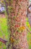 liquen y musgo en el tronco del árbol Imagen de archivo