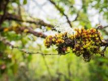 Liquen y vegetación que crecen en la rama de un árbol en el bosque imágenes de archivo libres de regalías
