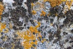 Liquenes de piedra coloridos Imagenes de archivo