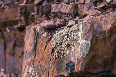 Liquenes que crecen en roca jurásica en Mt Diablo State Park imagenes de archivo