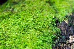 Liquenes verdes Imagen de archivo libre de regalías