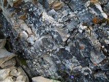 Liquenes y musgos en las piedras (Lena Pillars, Yakutia) Imagen de archivo libre de regalías