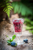 Liqueur made of alcohol and blueberries in forest Stock Image