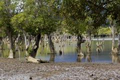 Liquica lake and marshland, East Timor Stock Photography