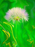 Liquid Dandelion Royalty Free Stock Photography