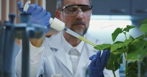 Liquide de chute de scientifique sur des feuilles photo libre de droits