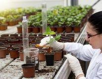 Liquide de versement de biologiste dans le pot de fleur avec la pousse image stock