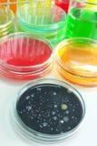 Liquido variopinto in articoli di vetro Fotografia Stock
