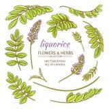 Liquorise elements vector set Stock Images