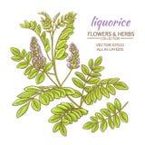 Liquorise vector illustration Stock Images