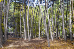 Liria, park van San Vicente Stock Afbeelding
