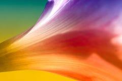 Lirio abstracto colorido de la lluvia Fotos de archivo libres de regalías