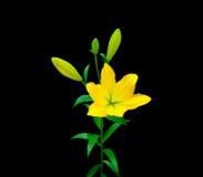 Lirio amarillo colorido Fotos de archivo