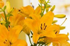 Lirio amarillo en el jardín Foto de archivo
