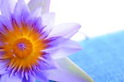 Lirio de agua púrpura con la nota azul de la textura Imagen de archivo libre de regalías