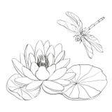 Lirio de agua y libélula. Imagen de archivo