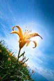 Lirio de día y cielo asoleado Foto de archivo libre de regalías