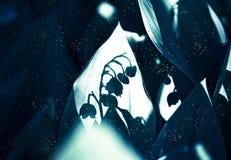 Lirio de los valles Sombra Imagen de archivo