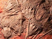 Lirio de mar de los elegans de Scyphocrinites, escultura natural imagen de archivo