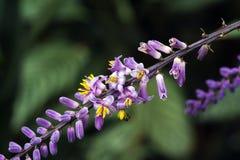 Lirio delgado de la palma en la floración en el fondo verde foto de archivo