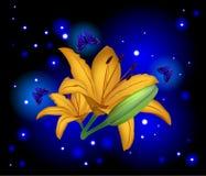 Lirio hermoso de las flores Fotografía de archivo